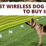Best Wireless Dog Fence to Buy in 2020